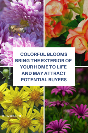 Colorful blooms will bring the exterior of your home to life and attract potential buyers
