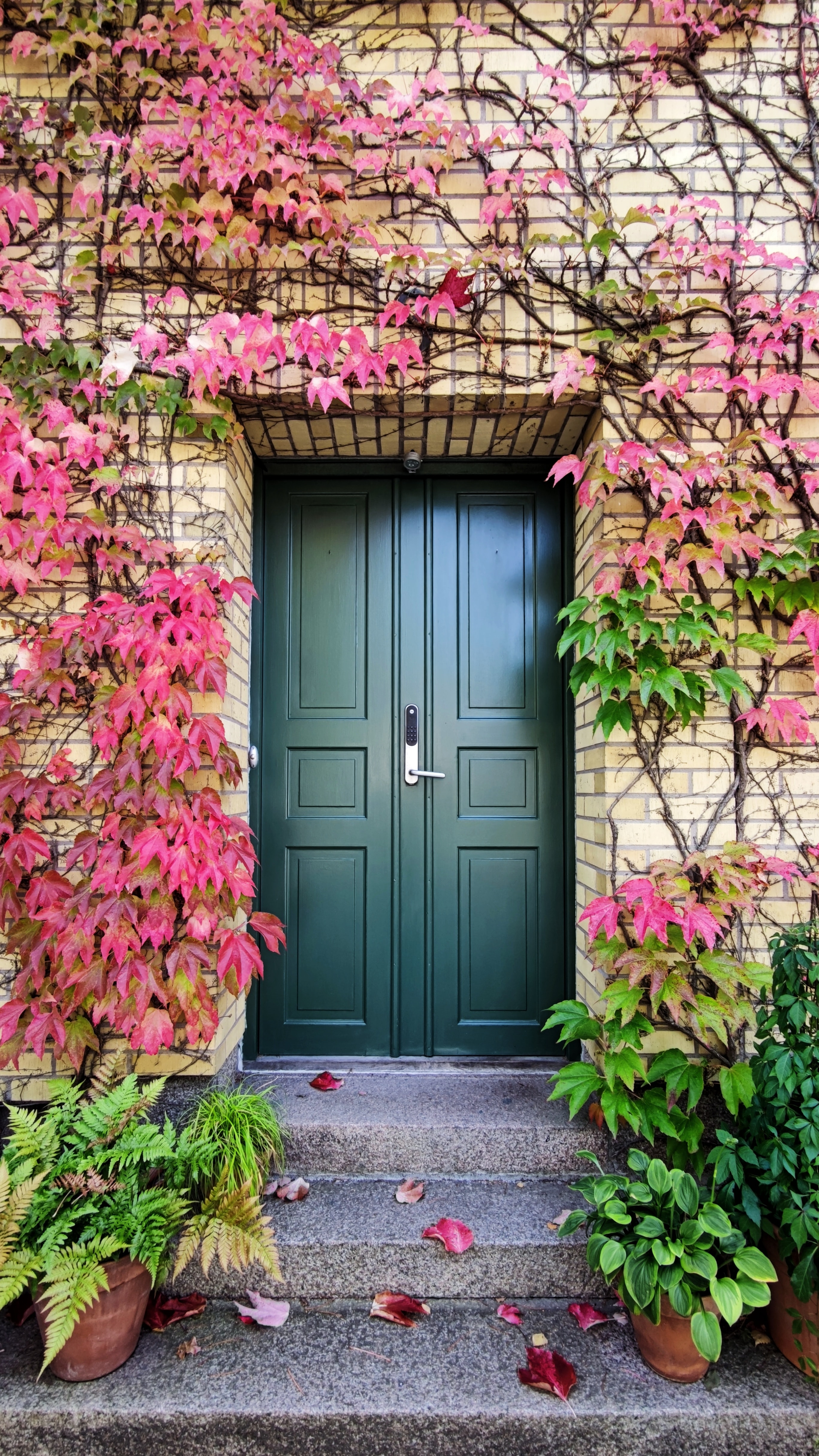 black-front-door-autumn-leaves-curb-appeal
